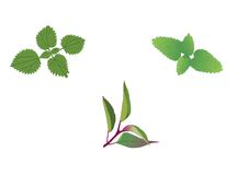 Medicinal Herbs Royalty Free Stock Photos