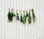 Medicinal herbs Royalty Free Stock Images
