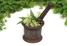 Medicinal herbs on a vintage mortar Royalty Free Stock Image