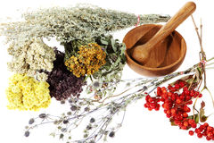 Medicinal herbs on the white background Royalty Free Stock Photo
