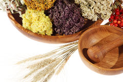 Medicinal herbs on the white background Stock Image