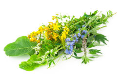 Medicinal herbs. On white background Stock Photography