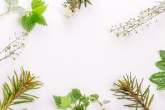 Medicinal herbs, wild rosemary, nettle, plantain, shepherd`s purse, on a white background royalty free stock photography