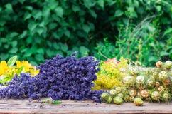 Medicinal Herbs Royalty Free Stock Photos