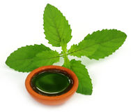Medicinal holy basil or tulsi leaves with extract. Over white background Stock Image
