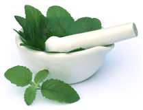 Medicinal holy basil or tulsi leaves Stock Image