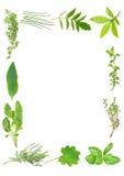 medicinal kulinariska örtar royaltyfri fotografi