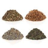 Medicinal and Magical Herbs stock image