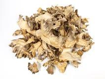 Medicinal Maitake Mushroom - Healthy Nutrition stock image