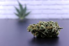 Medicinal marijuana buds and cannabis leaf stock images