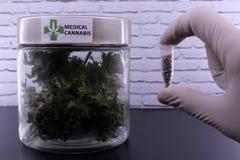 Medicinal marijuana buds and cannabis seeds royalty free stock images