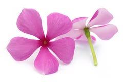 Medicinal Nayantara Stock Images