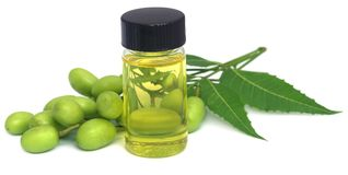 Medicinal neem extract. With fruits and leaves stock photography