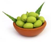 Medicinal neem fruits Stock Image