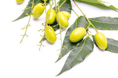 Medicinal neem fruits Stock Photos