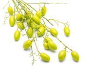 Medicinal neem fruits Royalty Free Stock Image