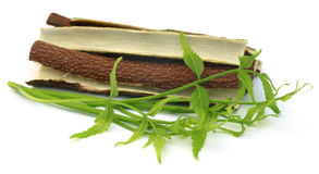 Medicinal neem leaves with bark of tree Stock Photos
