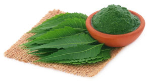 Medicinal neem leaves with ground paste. Over white background Royalty Free Stock Photography