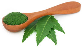 Medicinal neem leaves with ground paste Royalty Free Stock Photography