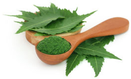 Medicinal neem leaves with ground paste Stock Photo
