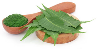 Medicinal neem leaves with ground paste. Over white background Stock Photography