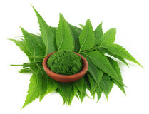 Medicinal neem leaves with paste royalty free stock image