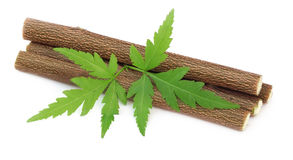 Medicinal neem twigs. With leaves Stock Photography