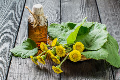 Medicinal plant – coltsfoot (Tussilago farfara) and the infusi Royalty Free Stock Photos