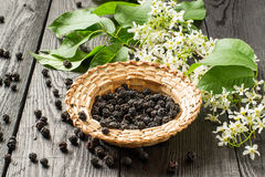 Medicinal plant bird cherry Prunus padus. Flowering branches and dried berries in a wicker bowl on a dark old wooden table. Selective focus Royalty Free Stock Images