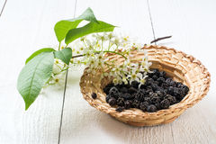 Medicinal plant bird cherry Prunus padus. Flowering branches and dried berries in a wicker bowl on a white wooden background. Selective focus Stock Photos
