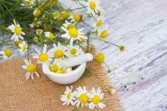 Medicinal plant camomile Stock Image