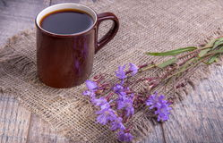 Medicinal plant chicory: flowers. The roots of the plants are used as a substitute for coffee. Drink from chicory in a. Cup on the old wooden table. Rustic Royalty Free Stock Photos