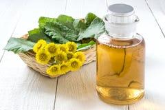 Medicinal plant coltsfoot (Tussilago farfara) and the infusion Royalty Free Stock Photos