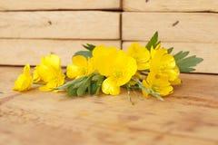 Medicinal plant - Creeping buttercup Royalty Free Stock Image