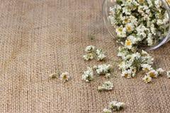 A medicinal plant Royalty Free Stock Image