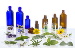 Medicinal plant and flower selection , peppermint, passiflora,, sage, thyme, lavender, marygold, lemon balm with an Stock Photo
