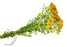 Medicinal plant: Hypericum perforatum. St. John's wort Stock Photos
