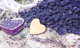 Medicinal plant lavender, natural cosmetics. Medicinal plant lavender for natural cosmetics stock image
