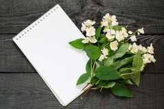 Medicinal plant philadelphus mock-orange and notebook. To write recipes and methods of application. Used herbal medicine and aromatherapy Stock Photography