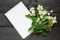 Medicinal plant philadelphus mock-orange and notebook Stock Photography