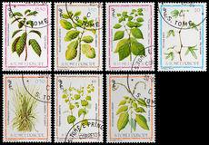Medicinal plant Stock Images