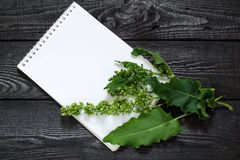 Medicinal plant Sorrel horse Rumex confertus, Asiatic Dock. And notebook to write recipes and methods of application. Used in herbal medicine, for production of Royalty Free Stock Photography