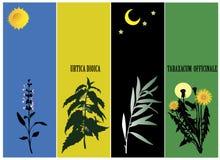 Medicinal plants Royalty Free Stock Photography