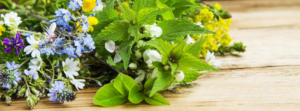 Medicinal plants bouquet royalty free stock photography