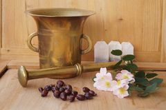 Medicinal plants - eglantine. Flowers and fruit for flavored teas Royalty Free Stock Photos