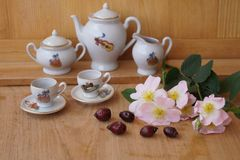 Medicinal plants - eglantine. Flowers and fruit for flavored teas Stock Image