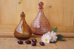 Medicinal plants - eglantine Stock Image
