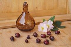 Medicinal plants - eglantine Royalty Free Stock Photo