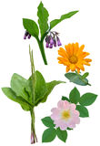 Medicinal plants and flowers Royalty Free Stock Images