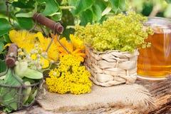 Medicinal plants, gathered medicinal herbs, herbal tea Royalty Free Stock Images